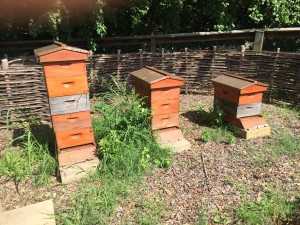 Beautiful Hives at the Sarah Duke Gardens I Discovered This Week!